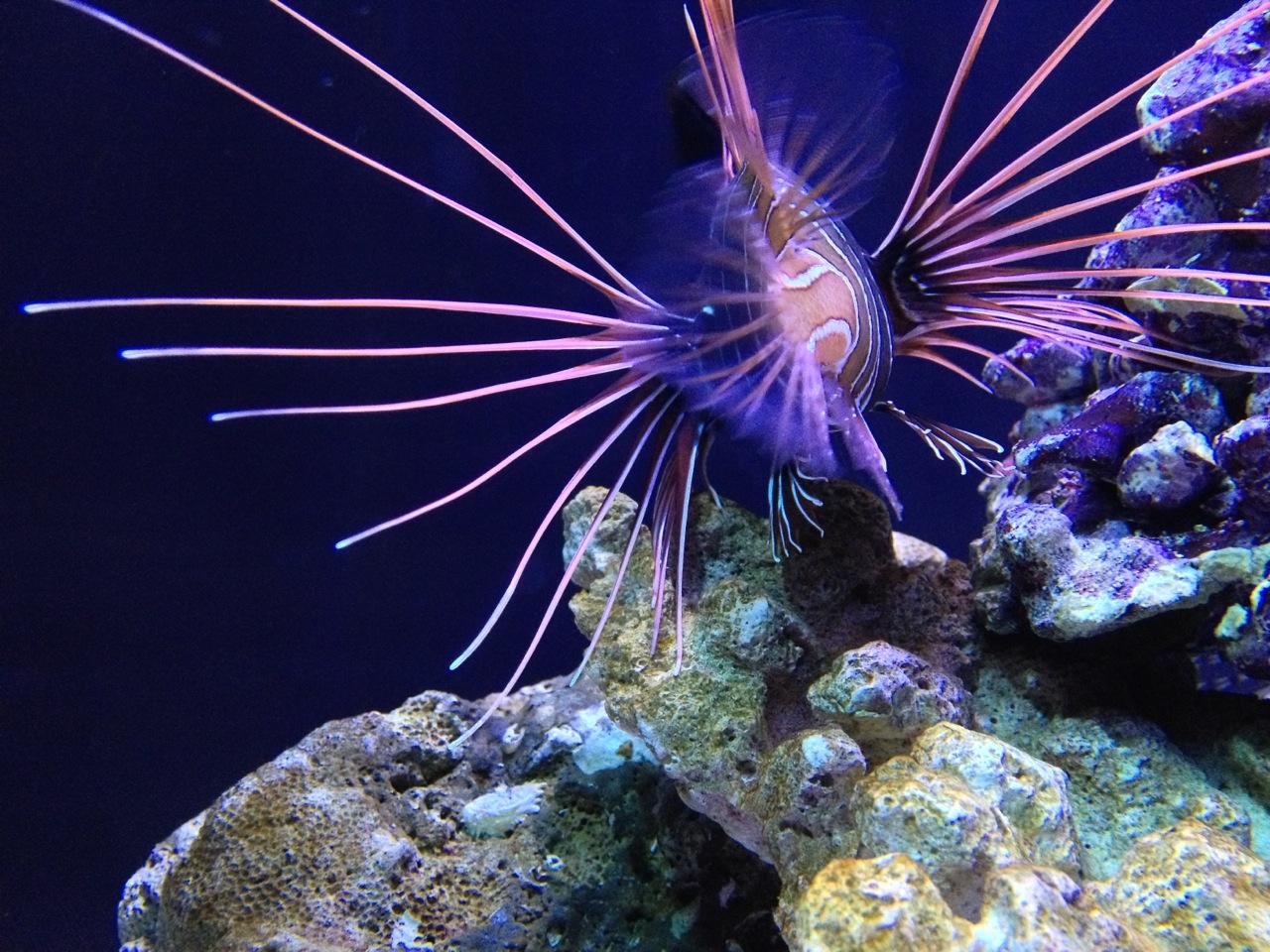 Who lives in Seattle Aquarium
