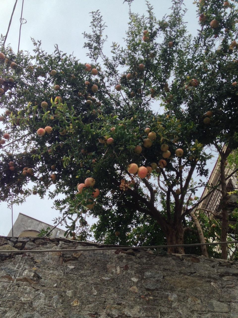 Pomegranates are everywhere