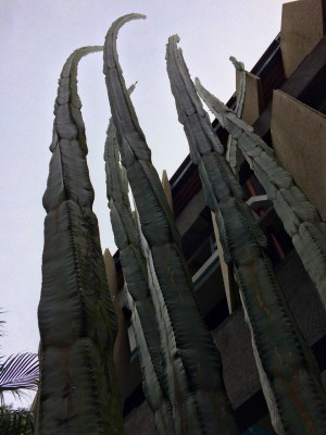 Giant cactuses are part of landscape