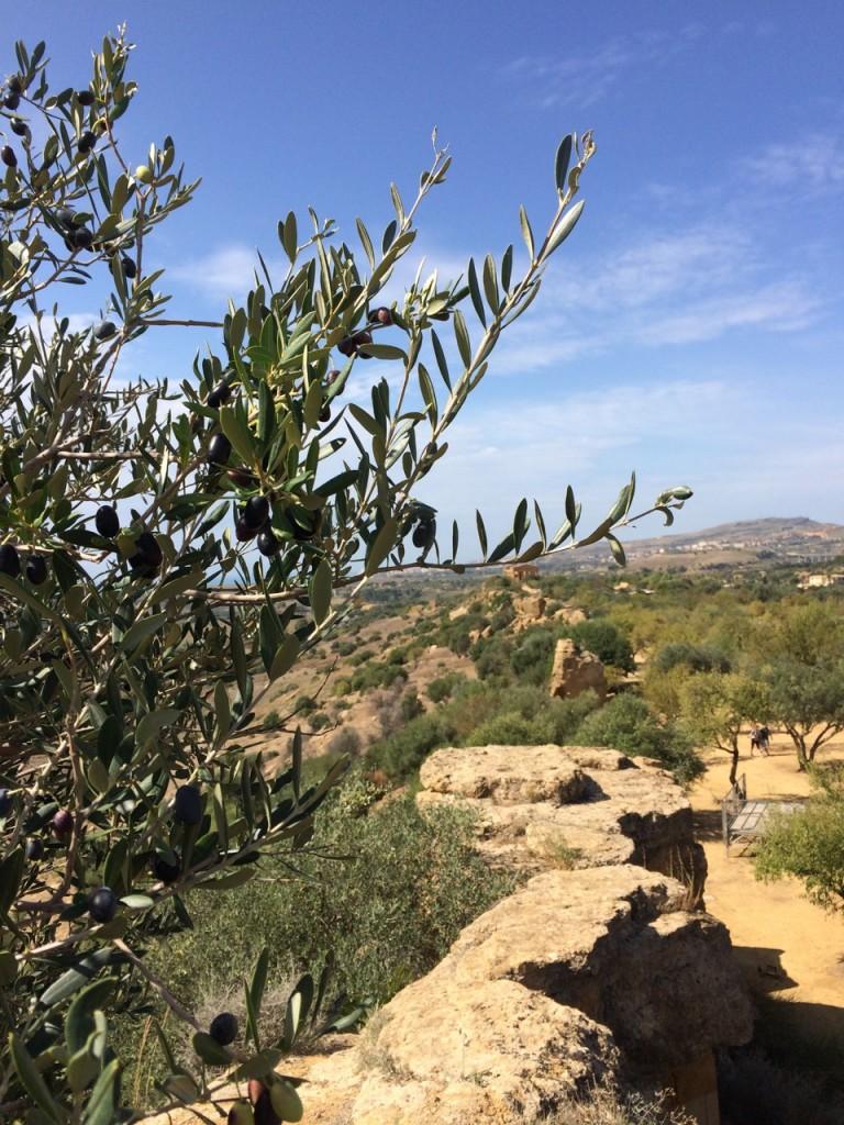 Agrigento landscape