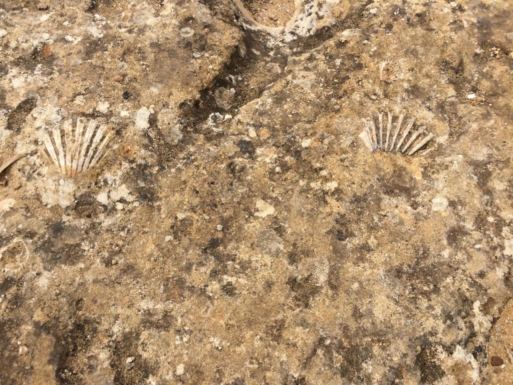 Local limestone