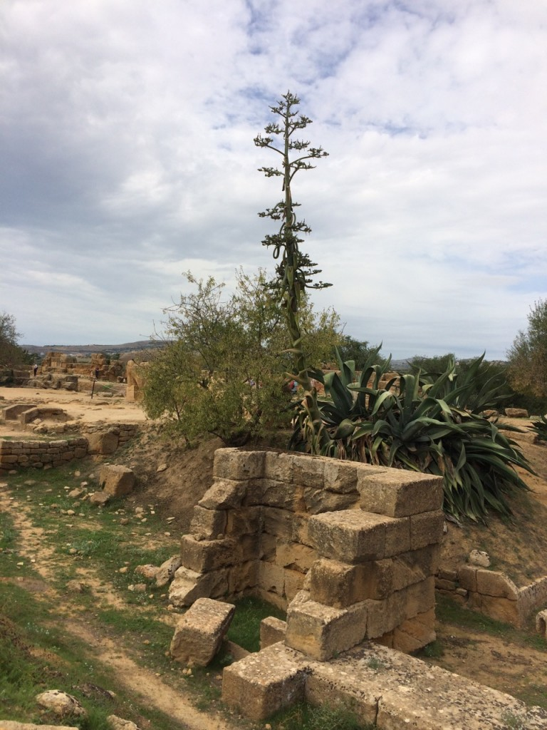 The ruins of Temple of Zeus
