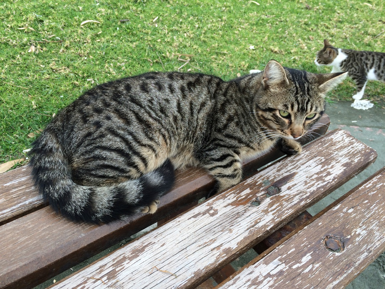 Cats of Cyprus