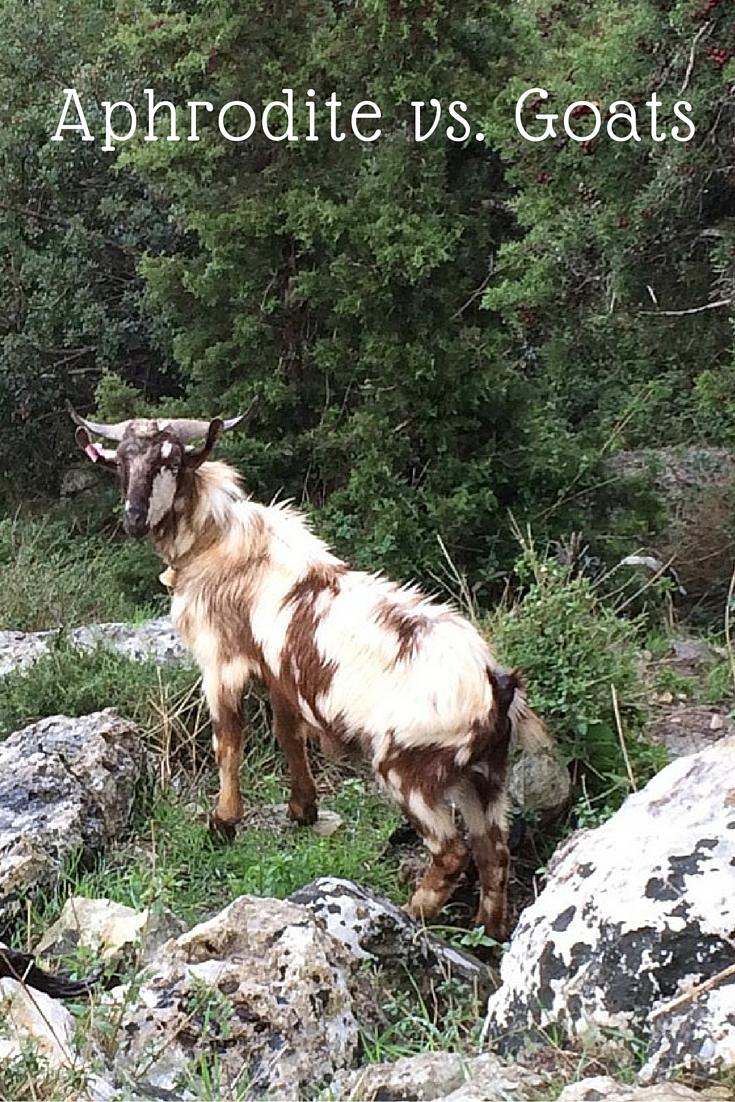 Aphrodite vs. Goats