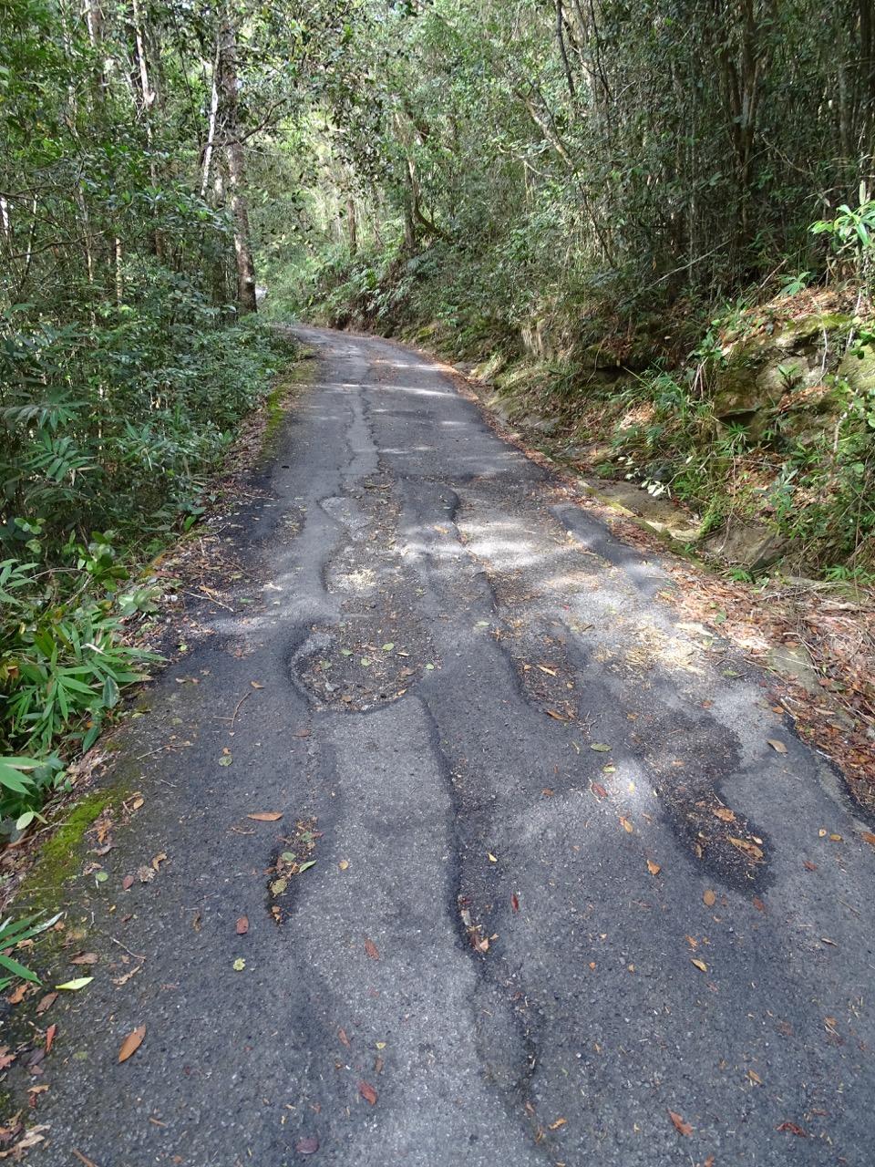 Gunung Jerai hiking