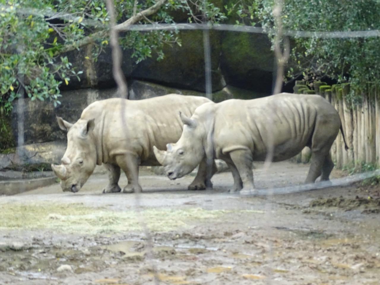 Rhinoceros at Taipei Zoo