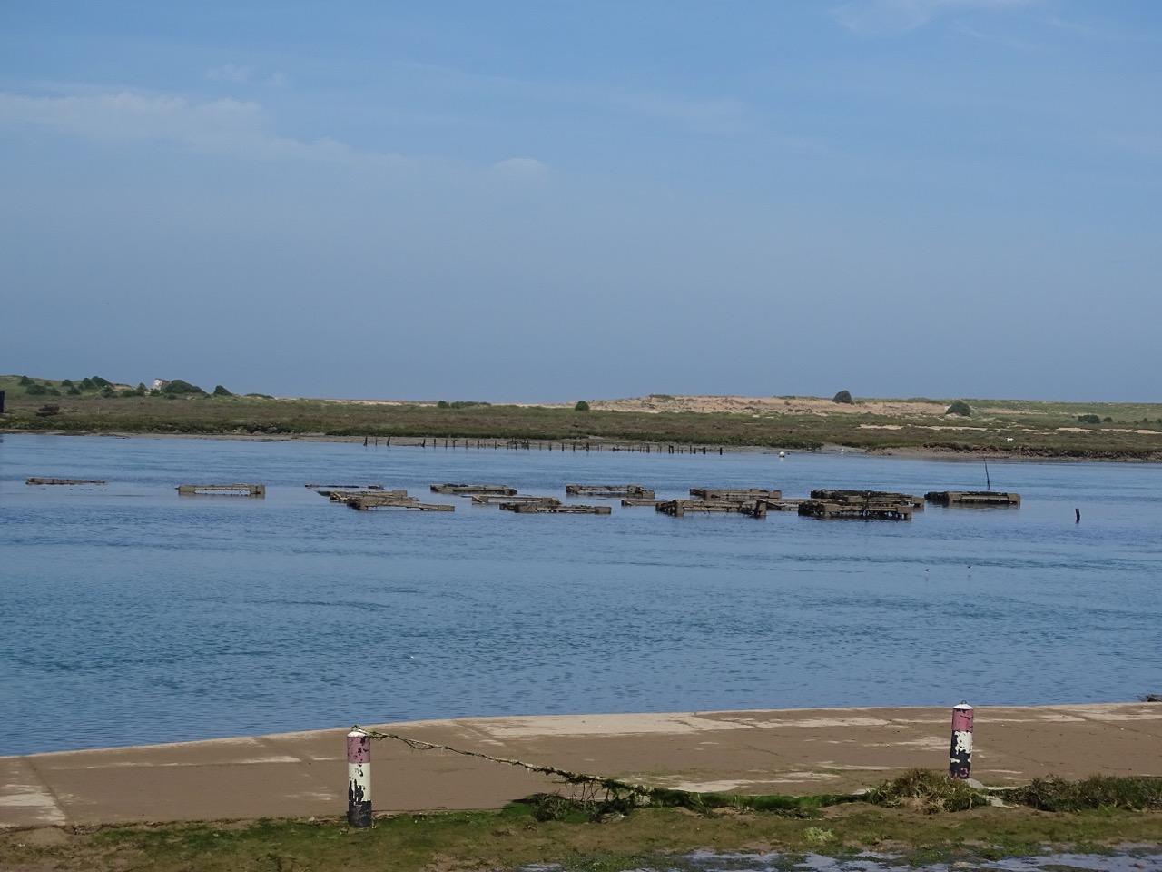 The oyster farm
