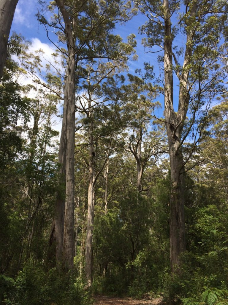 Karry trees