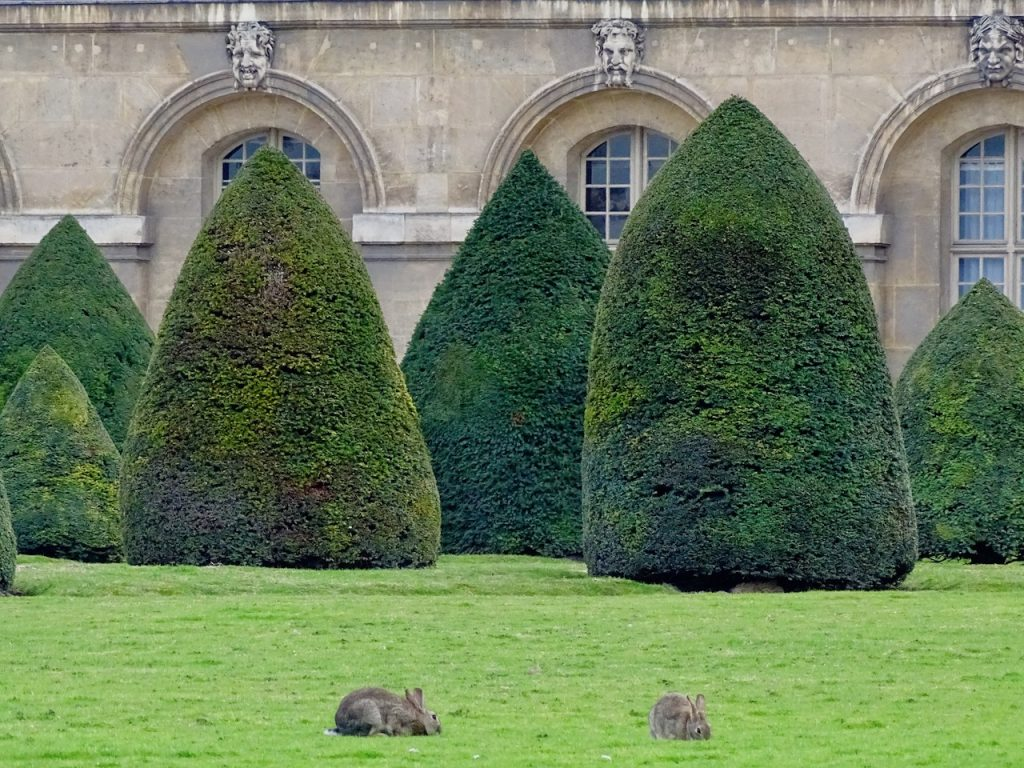 Bunnies In The Invalides Garden